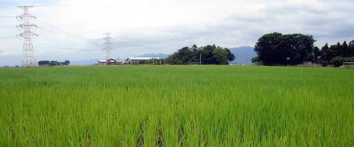 新潟の米作り 新潟米、新潟県産コシヒカリの新米を販売 < 新潟の米作り